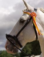 All leather De-Luxe In hand show serreta with leather browband